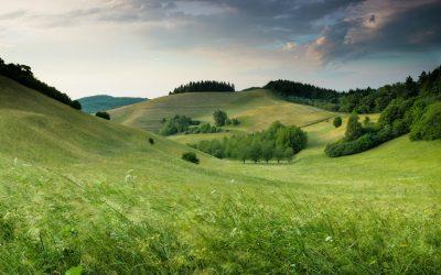 Regionale Wertschöpfung – Zukunftstrend oder verklärte Romantik?
